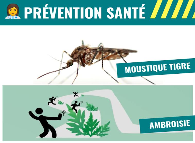 Ambroisie et Moustique tigre: attention danger !