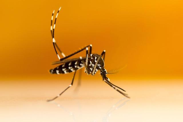 Tous ensemble contre le moustique tigre