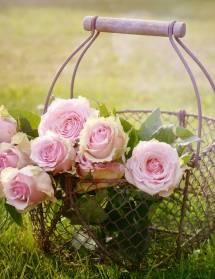 Vente de roses au marché