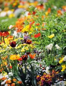 Horticultures de Demain : Savoirs d'antan, Solutions d'avenir