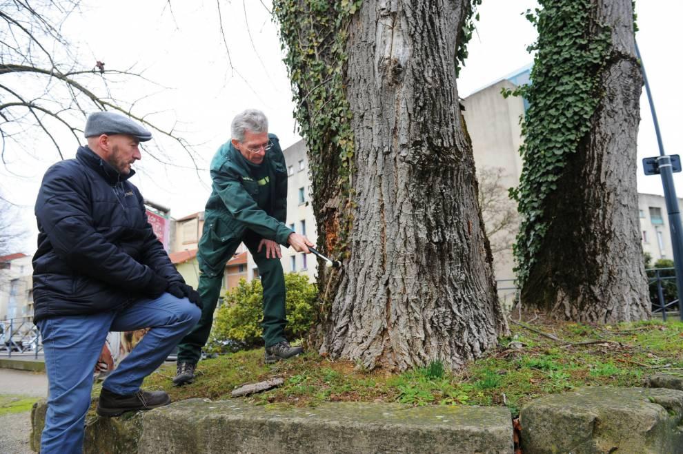 Un Plan de gestion de l'arbre
